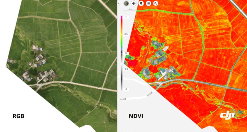 porównanie map RGB i NDVI wykonanych dronem DJI P4 Multispectral